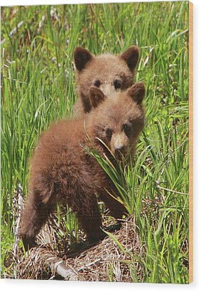 Black Bear Cubs Wood Print