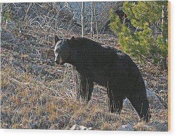 Black Bear Wood Print by Dave Clark