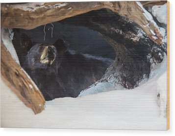 Wood Print featuring the digital art Black Bear In Its Winter Den by Chris Flees