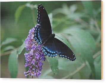 Black Beauty Wood Print by Lori Tambakis