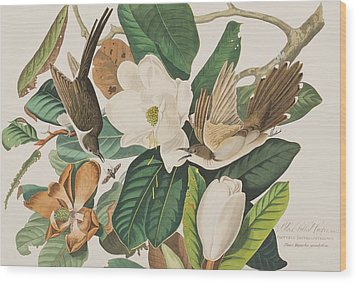 Black Billed Cuckoo Wood Print by John James Audubon