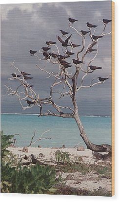 Wood Print featuring the photograph Black Birds by Mary-Lee Sanders