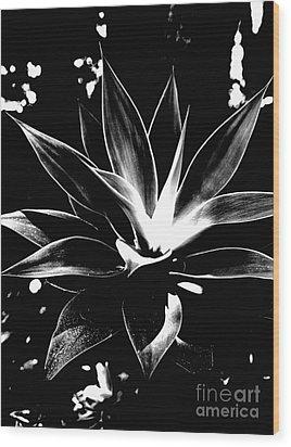 Black Cactus  Wood Print