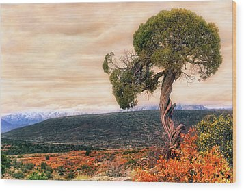 Black Canyon Juniper - Colorado - Autumn Wood Print by Jason Politte