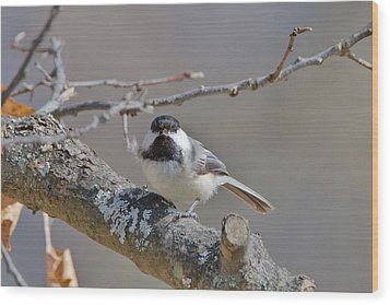 Wood Print featuring the photograph Black Capped Chickadee 1109 by Michael Peychich