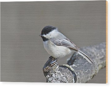 Wood Print featuring the photograph Black Capped Chickadee 1128 by Michael Peychich
