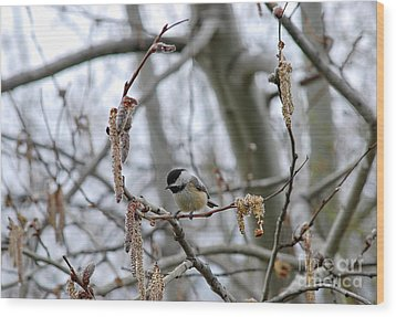 Wood Print featuring the photograph Black-capped Chickadee 20120321_38a by Tina Hopkins