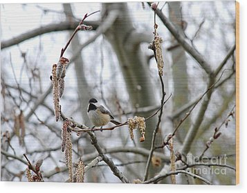 Wood Print featuring the photograph Black-capped Chickadee 20120321_39b by Tina Hopkins