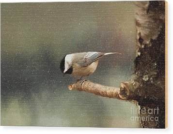 Wood Print featuring the photograph Black Capped Chickadee by Darren Fisher
