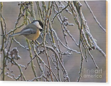 Black-capped Chickadee Wood Print