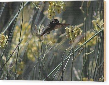 Black Chinned Hummingbird In Garden Wood Print by Colleen Cornelius