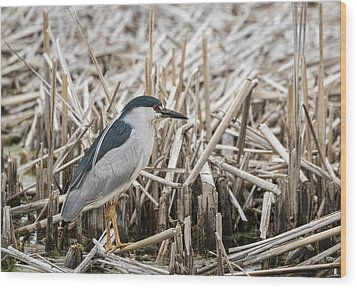 Black-crowned Night Heron 2017-1 Wood Print by Thomas Young