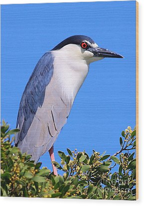 Black Crowned Night Heron Atop Tree Wood Print by Wingsdomain Art and Photography