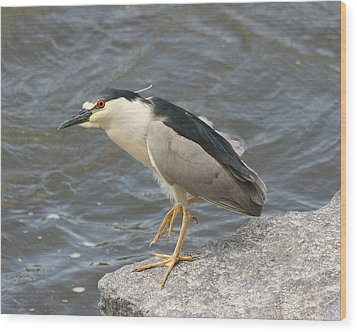 Wood Print featuring the photograph Black-crowned Night Heron by Doris Potter
