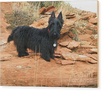 Black Dog Red Rock Wood Print by Michele Penner