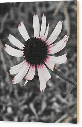 Wood Print featuring the photograph Black Eyed by Deborah  Crew-Johnson