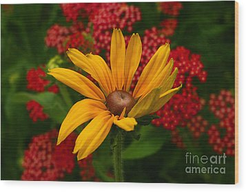 Black-eyed Susan And Yarrow Wood Print by Steve Augustin