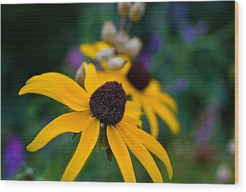 Wood Print featuring the photograph Black Eyed Susan Daisy by Gary Smith