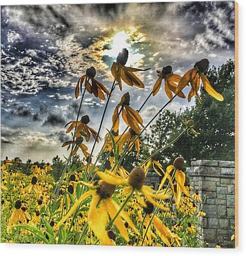 Black Eyed Susan Wood Print by Sumoflam Photography
