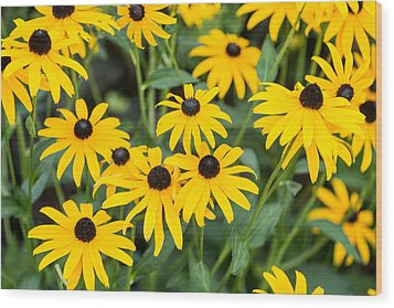 Black-eyed Susan Up Close Wood Print