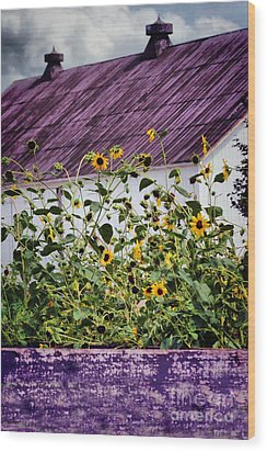 Black Eyed Susans Wood Print by Polly Peacock