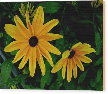Black-eyed Susans Wood Print by Robert Knight