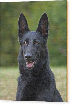 Black German Shepherd Dog Wood Print by Sandy Keeton