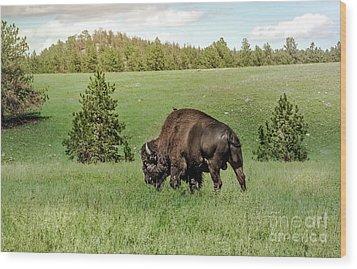Black Hills Bull Bison Wood Print by Robert Frederick