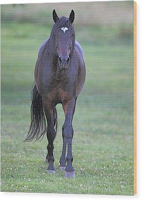 Black Horse Wood Print by Glenn Vidal