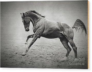 Black Horse In Dust Wood Print