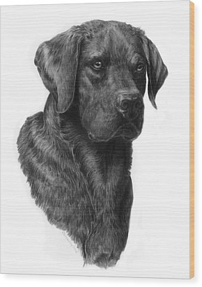 Black Lab Head Study 2 Wood Print by Laurie McGinley