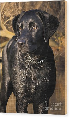 Black Labrador Retriever Dog Wood Print by Cathy  Beharriell