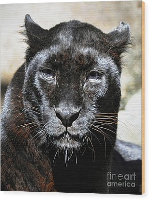 Wood Print featuring the photograph Black Leopard by Savannah Gibbs