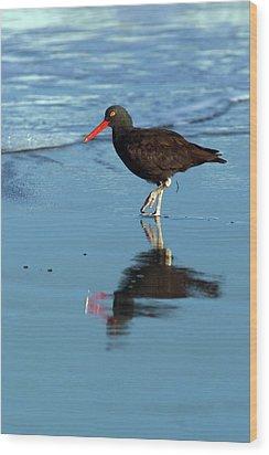 Black Oystercatcher Wood Print by Randall Ingalls