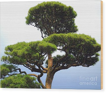 Black Pine Japan Wood Print