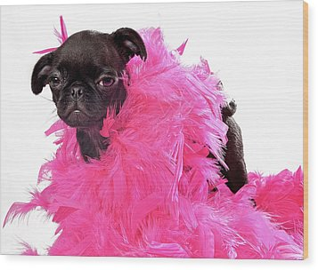Black Pug Puppy With Pink Boa Wood Print by Susan Schmitz