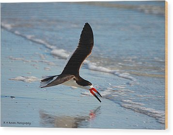Black Skimmer Wood Print by Barbara Bowen