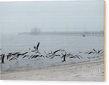 Black Skimmers - Biloxi Mississippi Wood Print by Scott Cameron