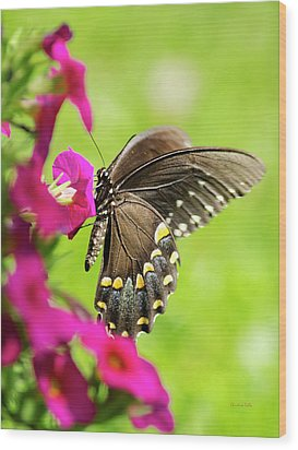 Wood Print featuring the photograph Black Swallowtail Butterfly by Christina Rollo