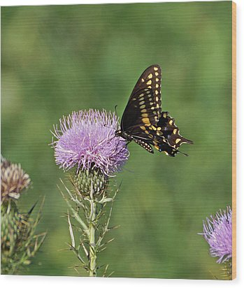 Wood Print featuring the photograph Black Swallowtail Butterfly by Sandy Keeton