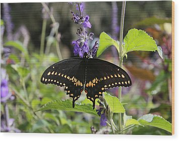 Black Swallowtail Wood Print