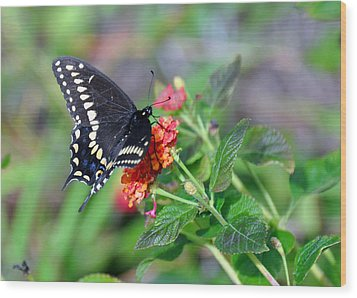 Wood Print featuring the photograph Black Swallowtail by Kay Lovingood