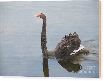 Black Swan Wood Print by Jan Daniels