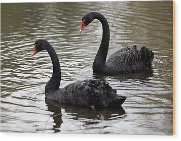 Black Swans Wood Print by Denise Swanson