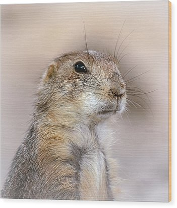 Black Tail Prairie Dog Wood Print by Elaine Malott