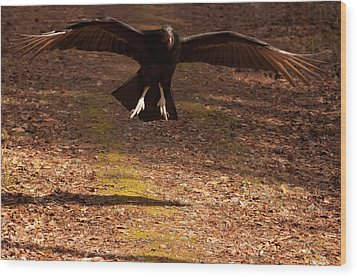 Black Vulture Landing Wood Print by Chris Flees