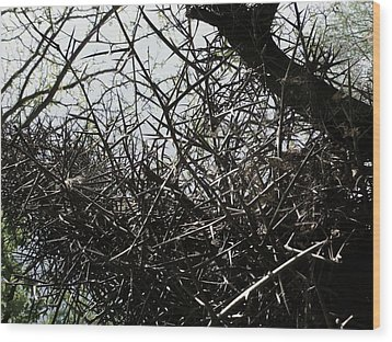 Black Walnut Spikes II Wood Print by Anna Villarreal Garbis