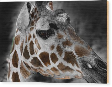 Black  White And Color Giraffe Wood Print by Anthony Jones