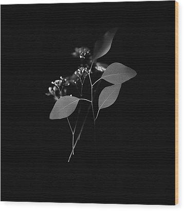 Floating Black And White Wood Print