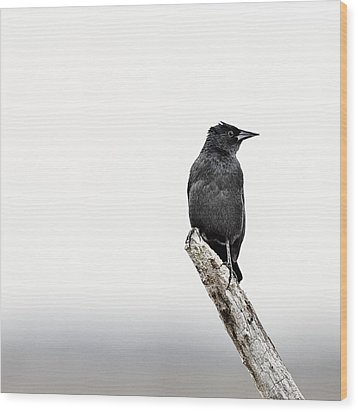 Blackbird Wood Print by Humboldt Street